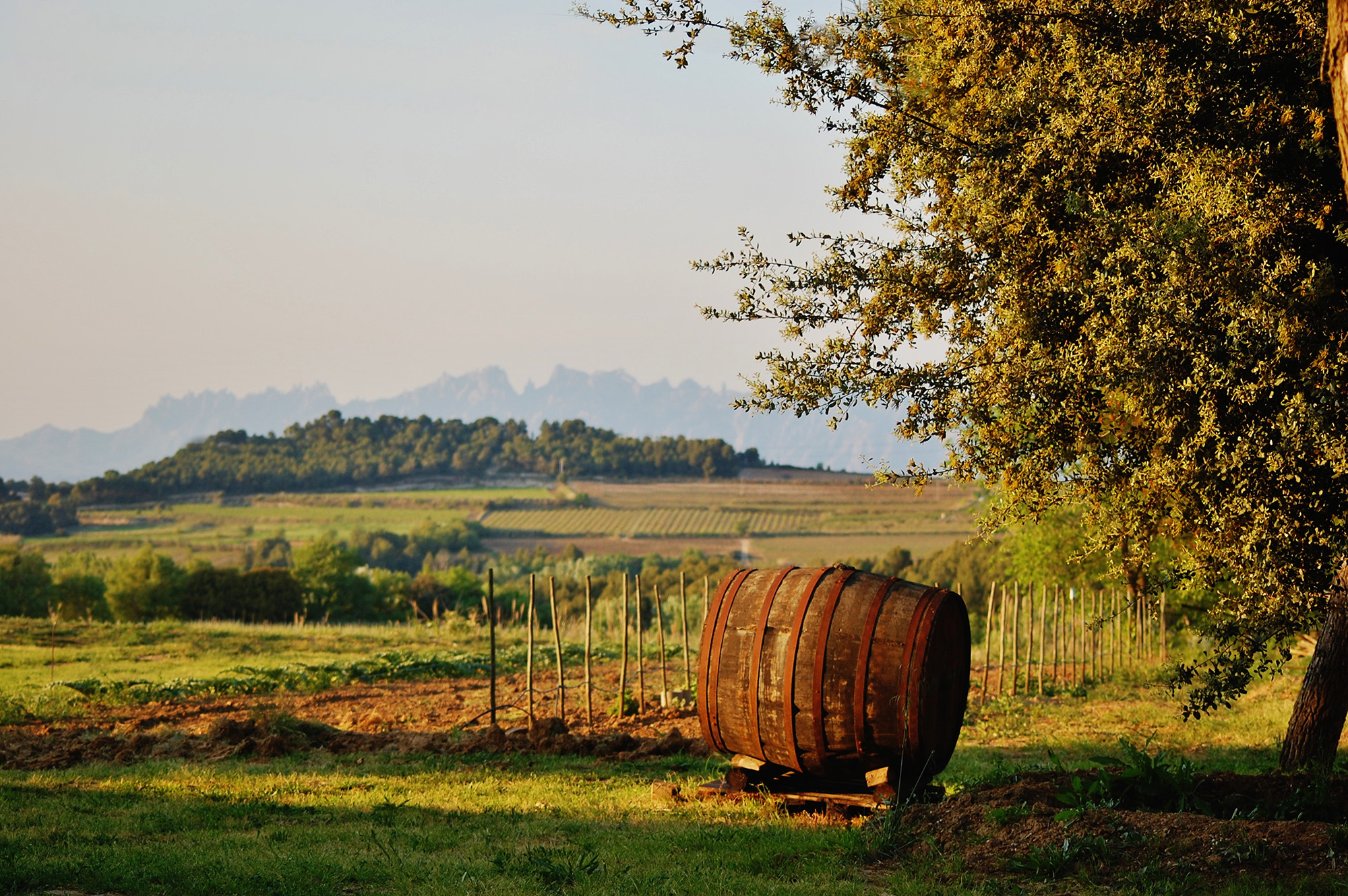 Winery-Maria-Rosa-Ferre-WEB RESIZE.jpg