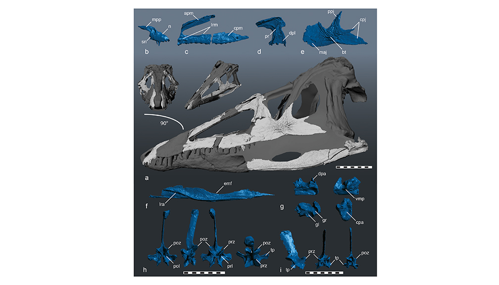 Dino Nugget