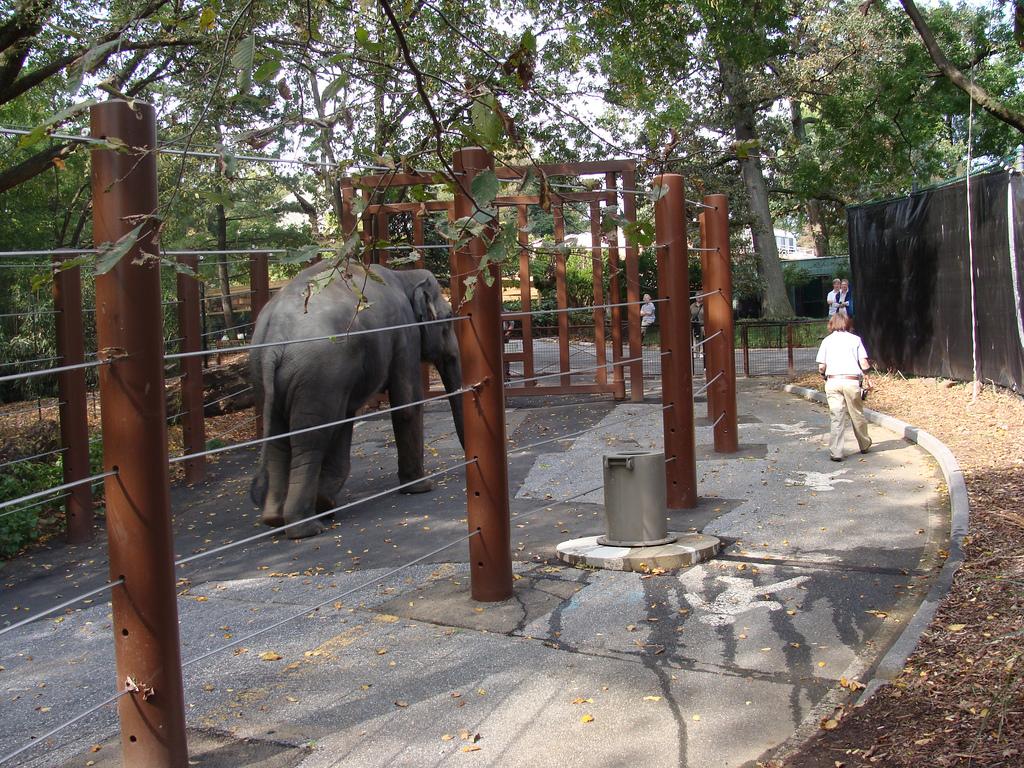 "One of the elephants on the ""Elephant Trek"" exercise trail."