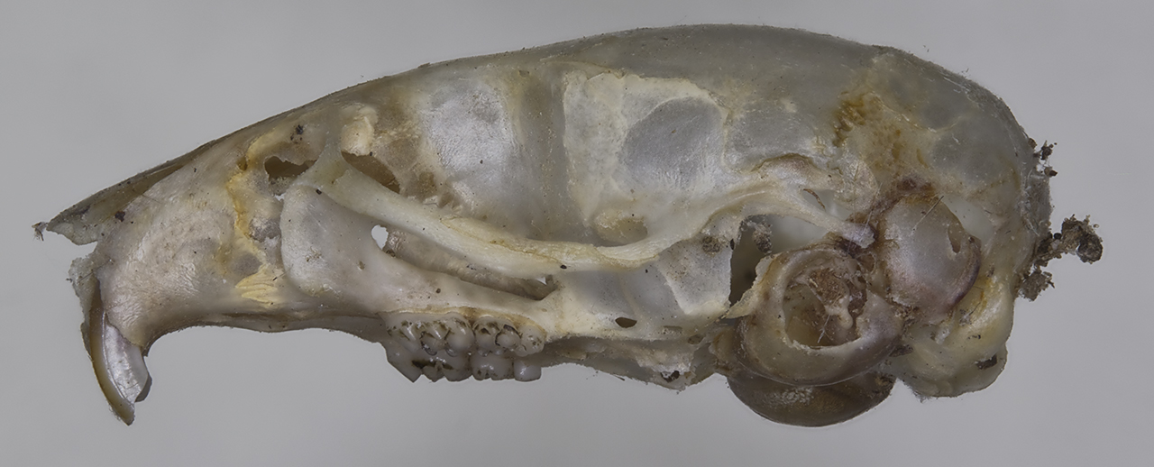 The first skull excavated from the site, with a mortal wound caused by a spear or an arrow.