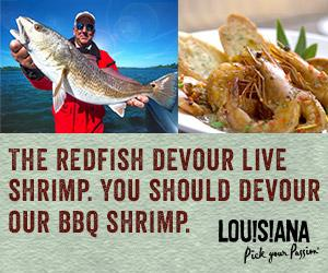 The Redfish Devour Live Shrimp. You Should Devour or BBQ Shrimp.