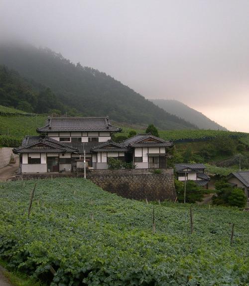 Vineyards in Japan's Yamanashi Prefecture
