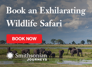 Book an Exhilarating Wildlife Safari with Smithsonian Journeys