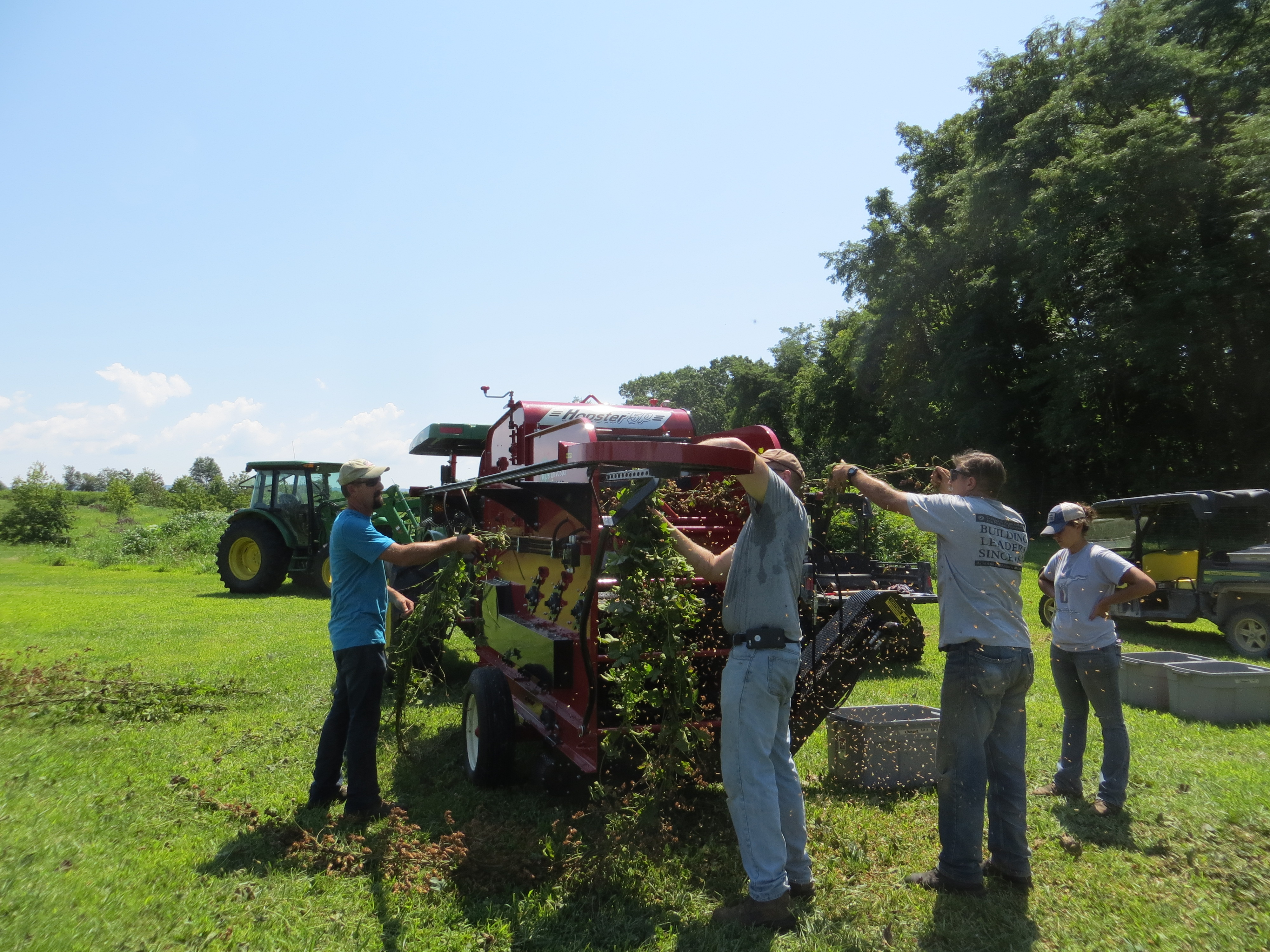 Hops are harvested at the University of Maryland farm.