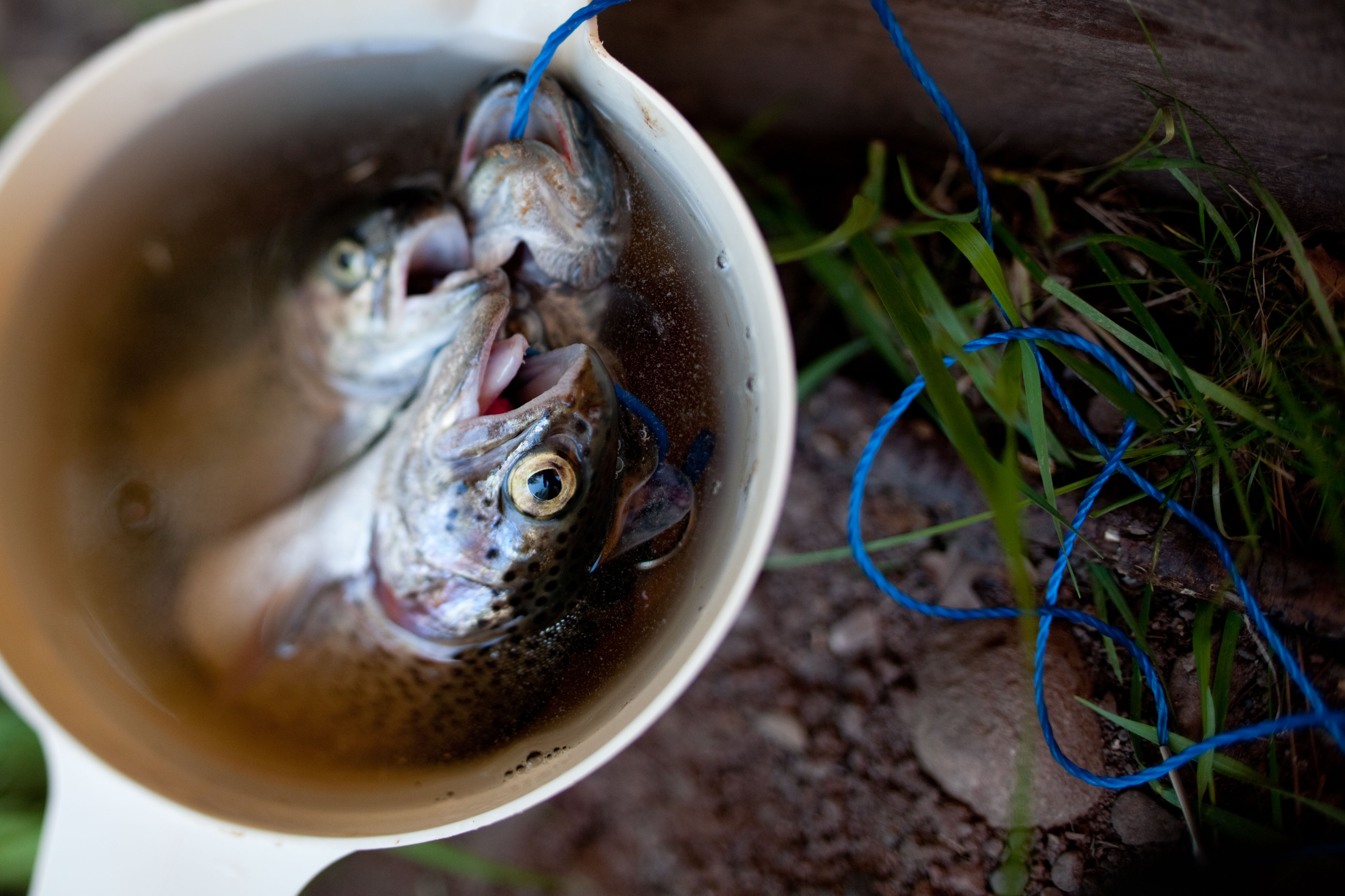Despite The Evidence That Fish Can Suffer, Animal Welfare Legislations And  Other Legal Protections Often Exclude Them. (wonderlandstock / Alamy)