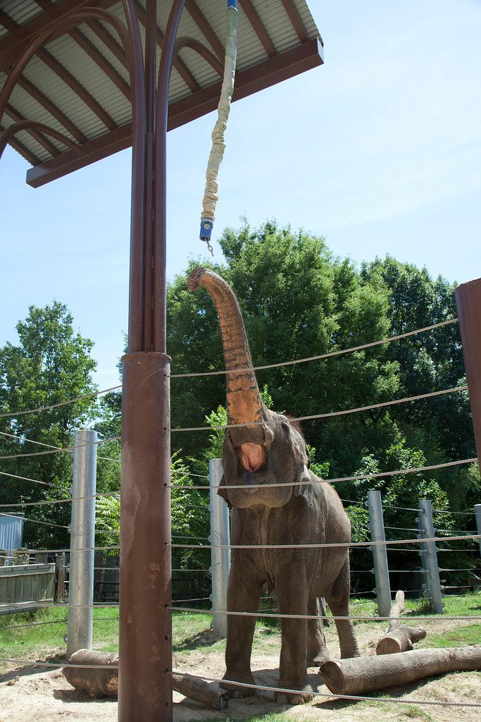 Elephant games!
