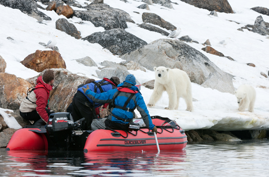 Brad Ohlund filming a polar bear for To the Arctic 3D