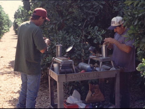 Growers use pressure gauges to test the hydration and stress levels of citrus trees