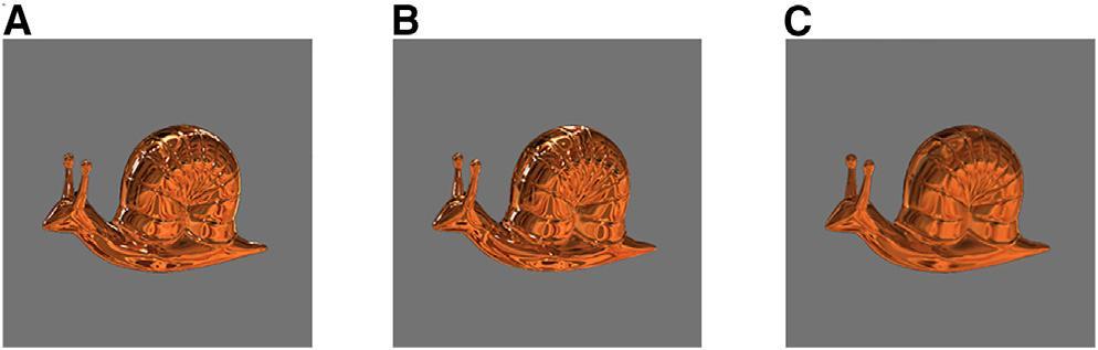 snails vision test