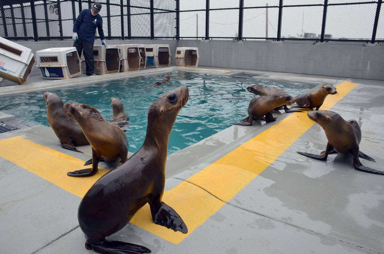 C. California sea lions_Ingrid Overgard.jpg