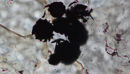 This May Be the Oldest Traces of Life Yet Found
