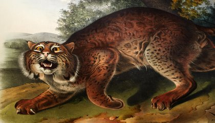 The Fantastic Beasts of John James Audubon's Little-Known Book on Mammals