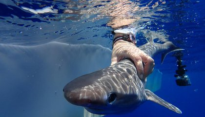 Scientists Identify New Species of Elusive Deep-Sea Shark